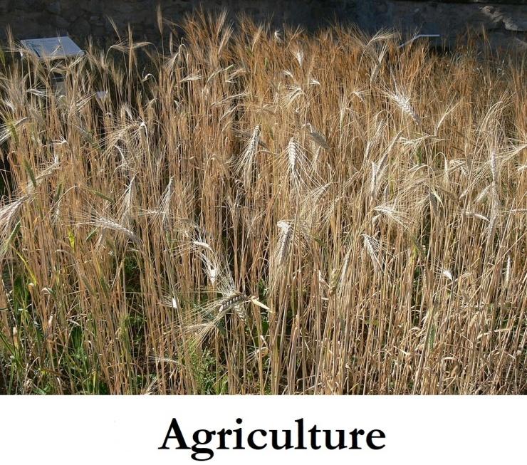 4Agriculture_LI